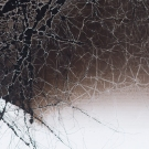 Detail of Sharyn O'Mara's carbon burnout on glass, Untitled I-III, 2015